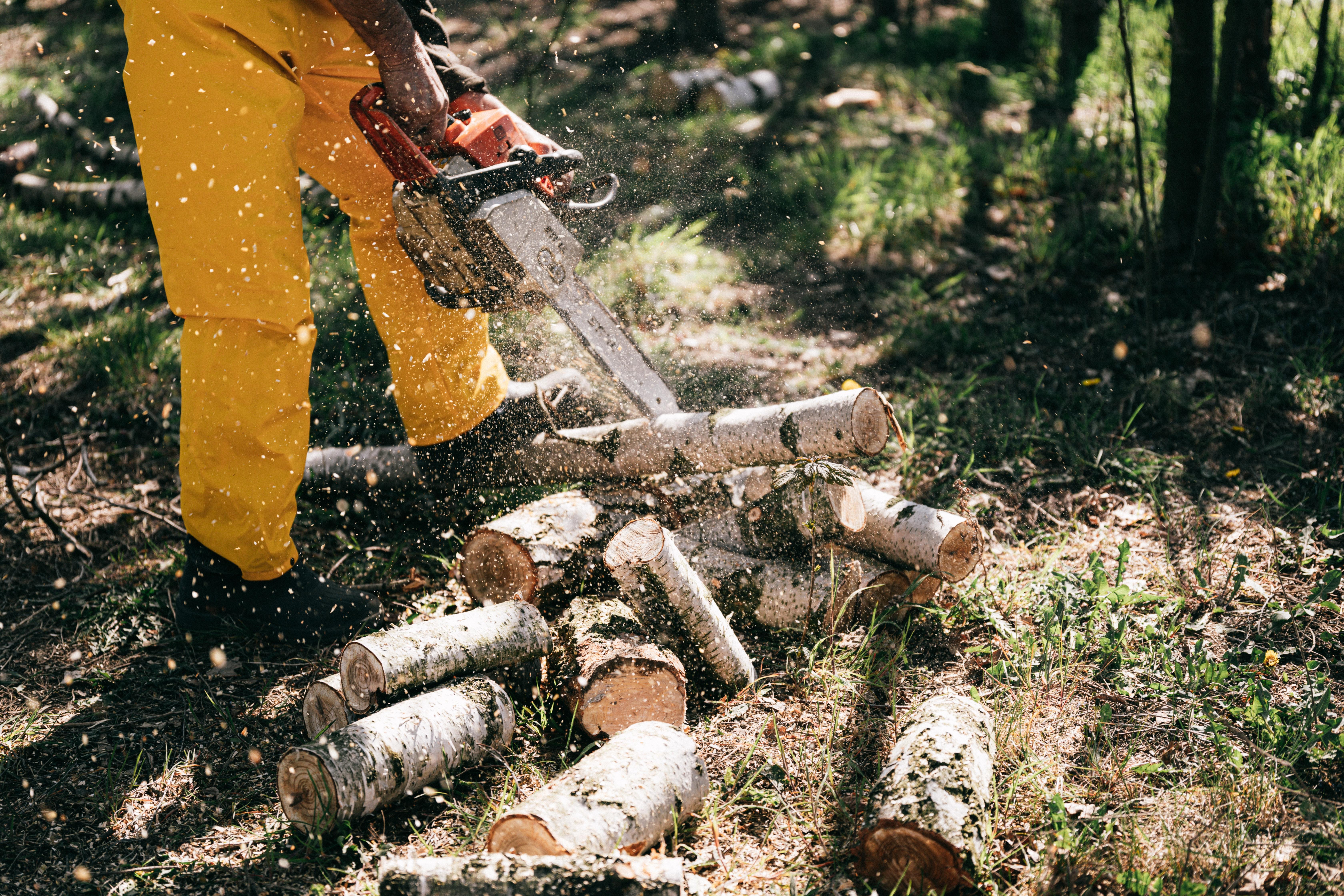 Exploatarea forestiera, pe agenda inspectorilor de munca